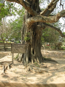the Killing Tree - where children were brutally killed